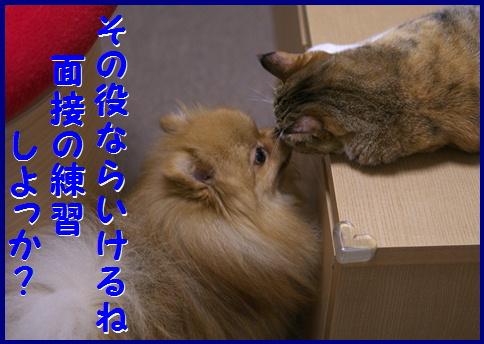 blog女優5b