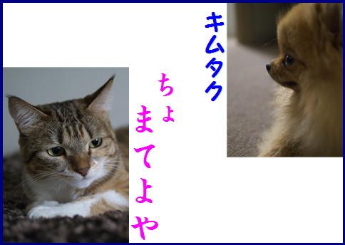 blog女優9b