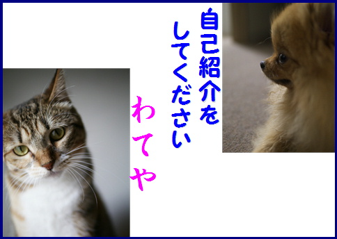 blog女優6c