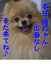 blogまたきてね20141014