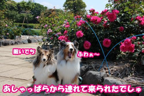 004_convert_20140509171012.jpg