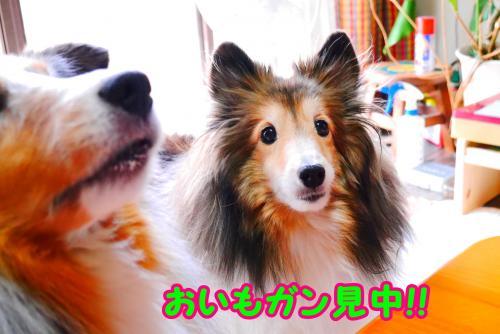 011_convert_20141011162253.jpg