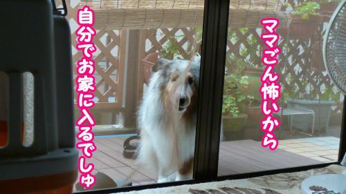 014_convert_20140806180610.jpg