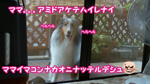 015_convert_20140806180639.jpg