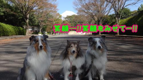 015_convert_20141016173027.jpg