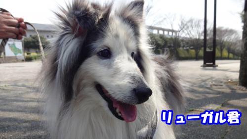 024_convert_20140410171458.jpg