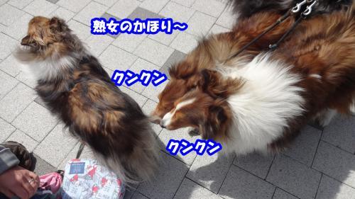042_convert_20140323092328.jpg