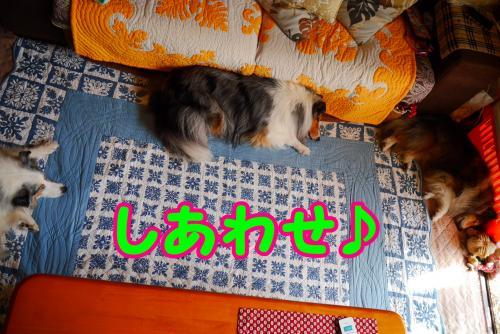 042_convert_20141004155108.jpg