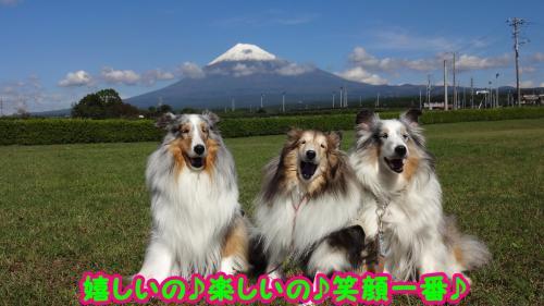 100_convert_20141016173503.jpg