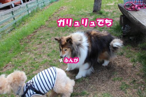 175_convert_20140507113325.jpg
