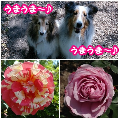 201405161.jpg