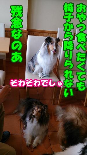 2166_convert_20140513190404.jpg