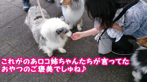 25_convert_20140704111637.jpg