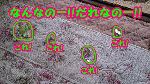 2704_convert_20141008173428.jpg