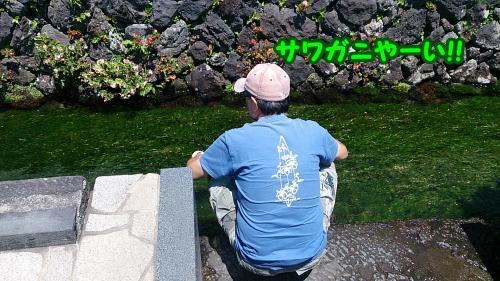 DSC_2497_convert_20140730173341.jpg