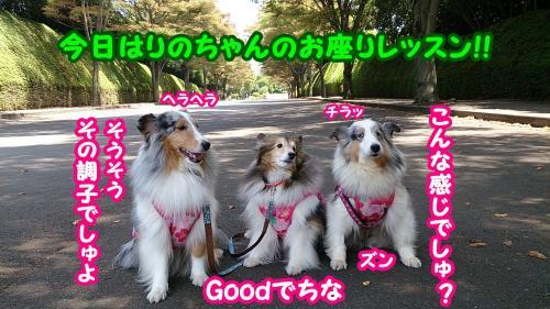 DSC_2506_convert_20140731135500.jpg