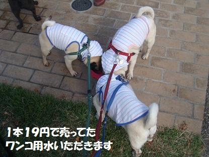 DSC09640_201410132025500fc.jpg