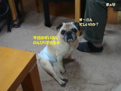 DSC09799_201410191120361a2.jpg