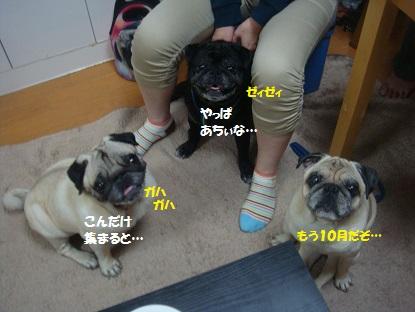 DSC09888_201410191350180fa.jpg