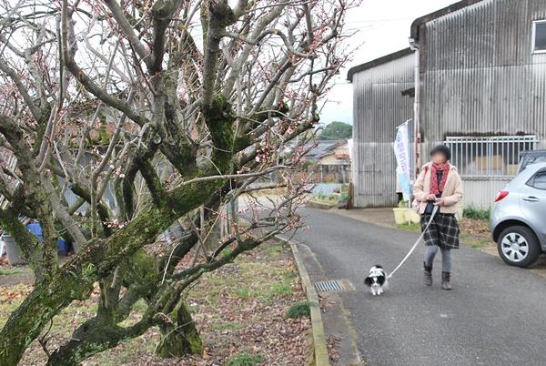 入り口付近の梅を見ながら散策中