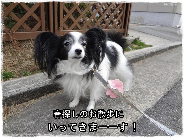 春探しのお散歩