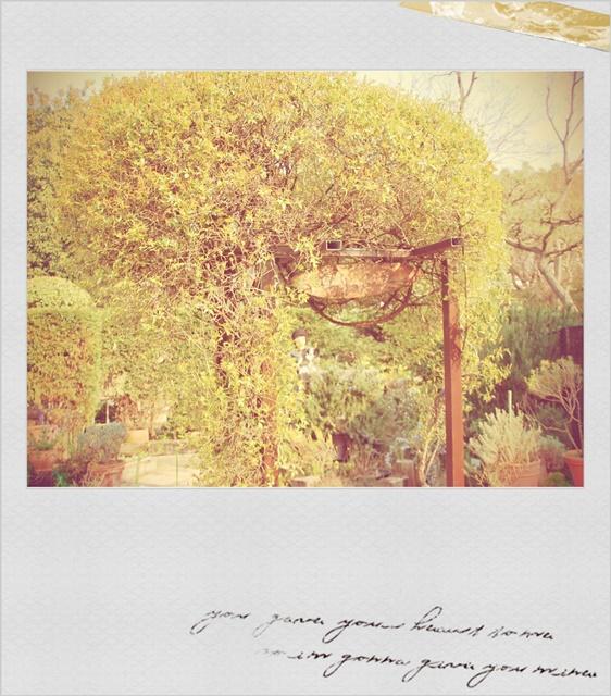 香りの小庭2