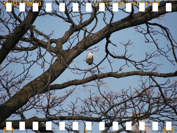 木の上にサギ