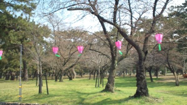 ぼんぼりと桜の木
