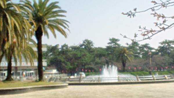 噴水と桜の木
