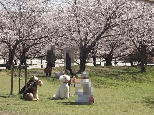 桜とワンちゃん