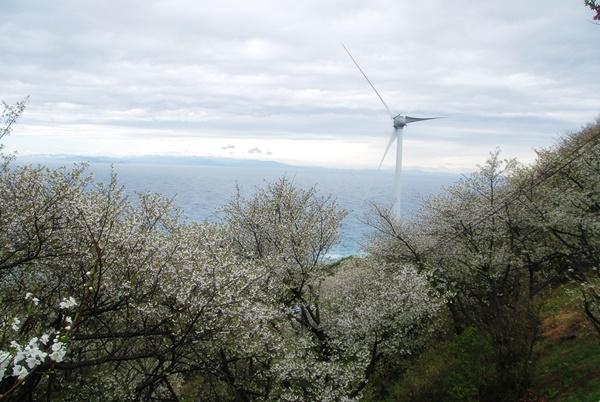 山桜と風車