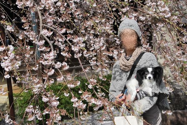 枝垂桜の前で(抱っこ)