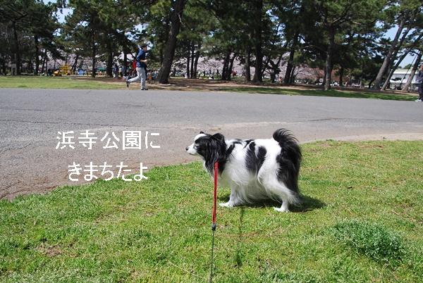 浜寺公園に来ました