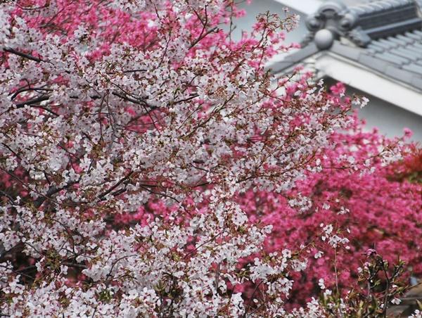 奥には桃の木も