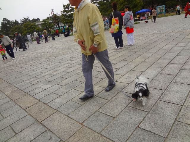 パパと歩くルビー1