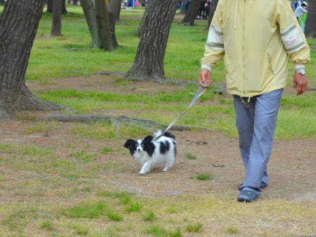 パパと歩くルビー3
