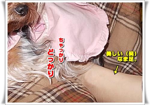 DSCN6375.jpg