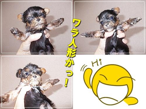 catsennbaby.jpg