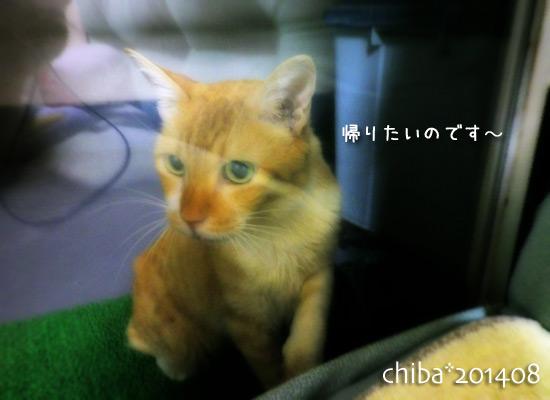 chiba14-08-133.jpg