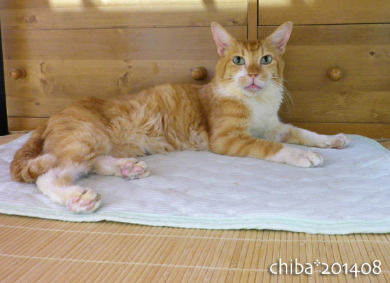chiba14-08-137.jpg