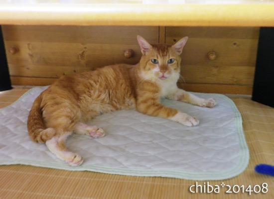 chiba14-08-139.jpg