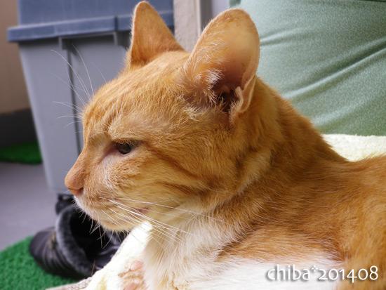 chiba14-08-157.jpg