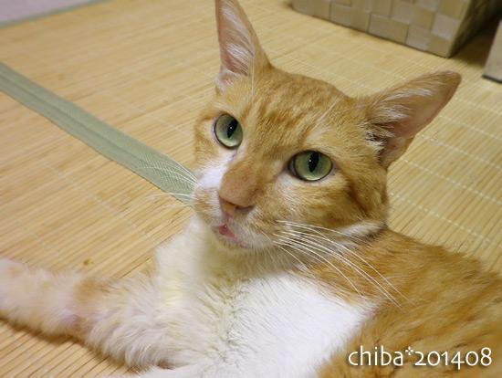 chiba14-08-168.jpg