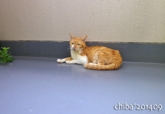 chiba14-09-06.jpg