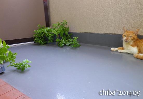 chiba14-09-07.jpg