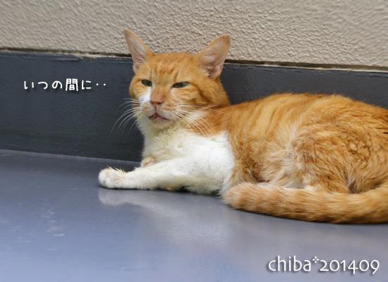 chiba14-09-08.jpg