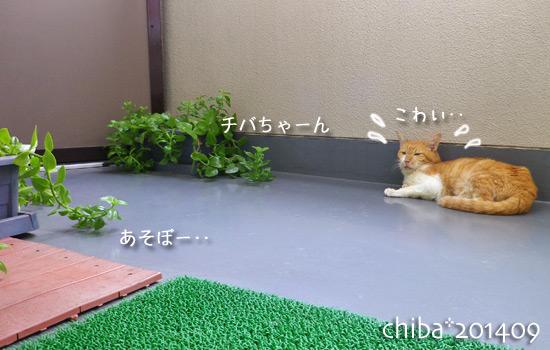 chiba14-09-09.jpg