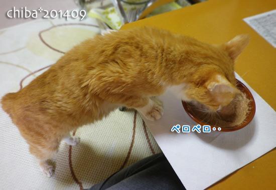 chiba14-09-101.jpg