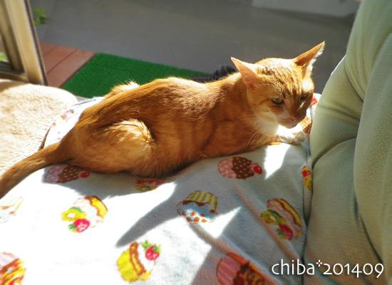 chiba14-09-112.jpg