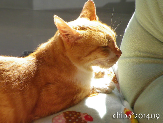 chiba14-09-113.jpg